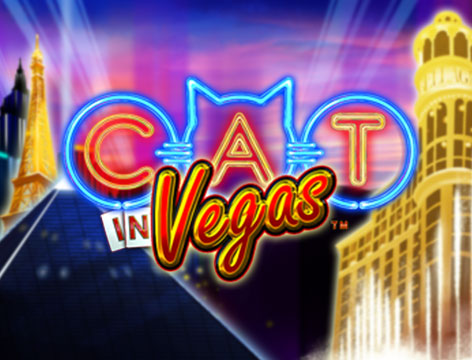 Cat in Vegas